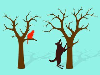 Barking up the wrong tree #18562881