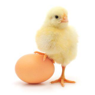 Chicken & egg_000016030848XSmall