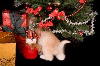 Seasonal wishes_000007377557XSmall