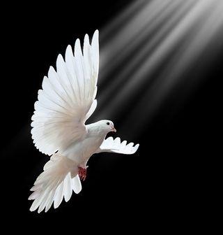 Peace 7939822_s