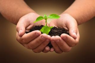 Planting 123rf.com_43790027_s